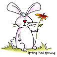 Bunnysprungweb