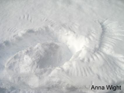 AnnaWight_0657-425