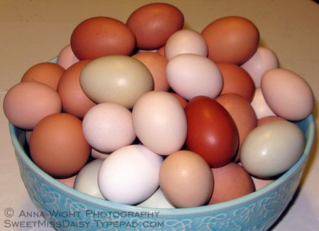 AnnaWightEGGS
