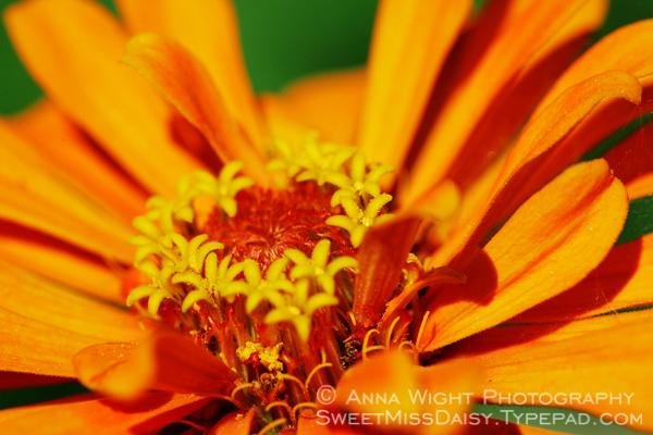 AnnaWightKR7I3700web600