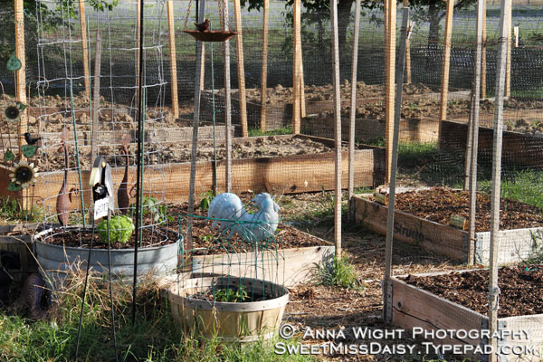 AnnaWight3430web600