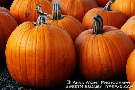 AnnaWight4648web600