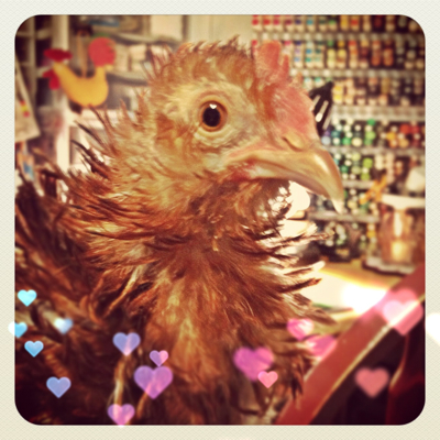 Our Latest House Chicken