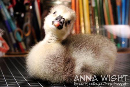 AnnaWight7137
