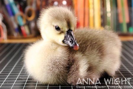 AnnaWight7122
