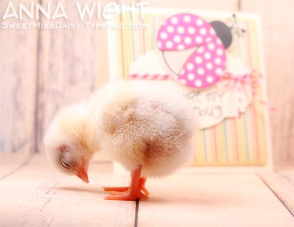 AnnaWight7025