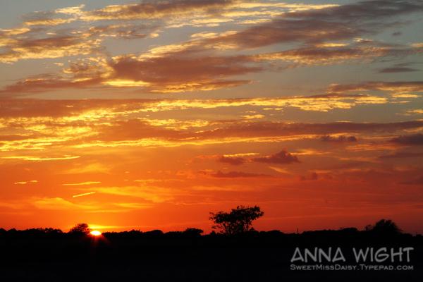 AnnaWight8458