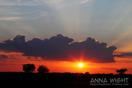 AnnaWight8478