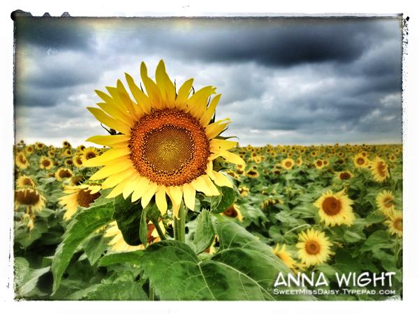 AnnaWightSunflower-iPh-photo6web600