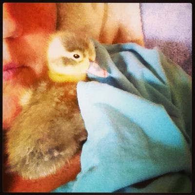 Surprise Baby Duck!