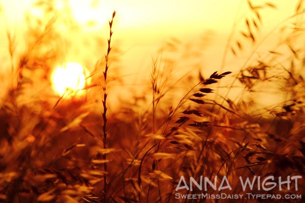 AnnaWight7533