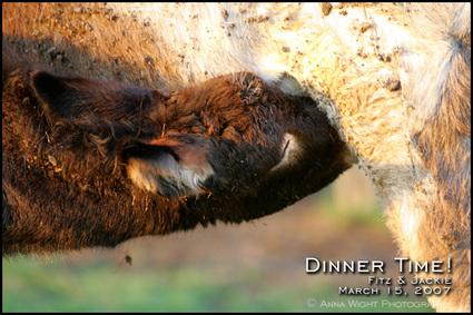 Dinnertime_annawight_2