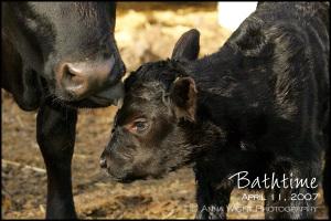 Bathtime04112007_2