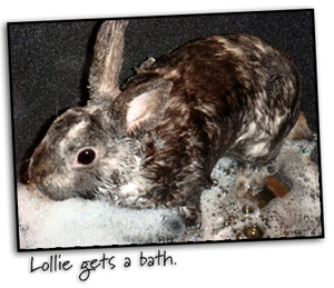 Lollie_bathtime2