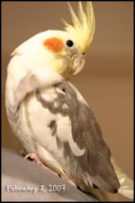 Aw_newbird