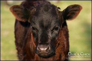 Dixieschick