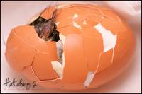 Hatching2_annawight_1