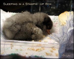 Sleepinginstampinup_1